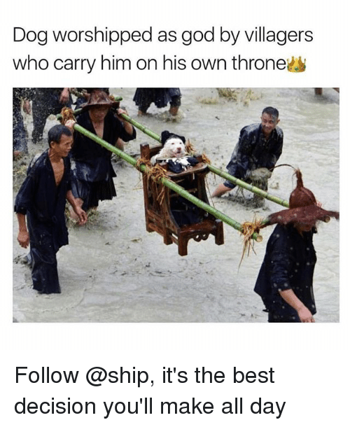 villagers: Dog worshipped as god by villagers  who carry him on his own throne Follow @ship, it's the best decision you'll make all day