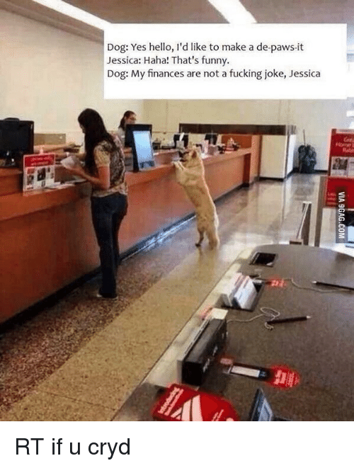 Finance, Memes, and 🤖: Dog: Yes hello, I'd like to make a de-paws-it  Jessica: Haha! That's funny.  Dog: My finances are not a fucking joke, Jessica RT if u cryd