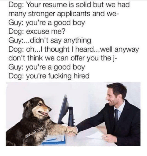 dank: Dog: Your resume is solid but we had  many stronger applicants and we-  Guy: you're a good boy  Dog: excuse me?  Guy:...didn't say anything  Dog: oh...l thought I heard...well anyway  don't think we can offer you the j-  Guy: you're a good boy  Dog: you're fucking hired