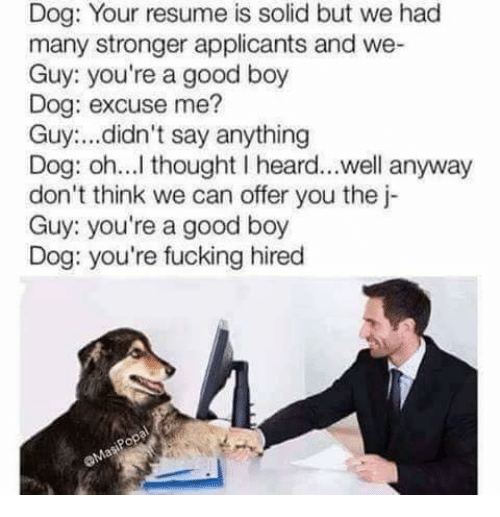 Dank Memes: Dog: Your resume is solid but we had  many stronger applicants and we-  Guy: you're a good boy  Dog: excuse me?  Guy didn't say anything  Dog: oh...l thought l heard...well anyway  don't think we can offer you the j-  Guy: you're a good boy  Dog: you're fucking hired
