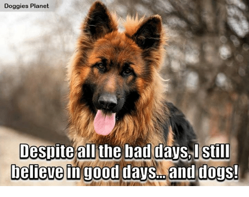 Bad Day, Memes, and Planets: Doggies Planet  Despite all the bad days, I still  believe in good days and dogs!
