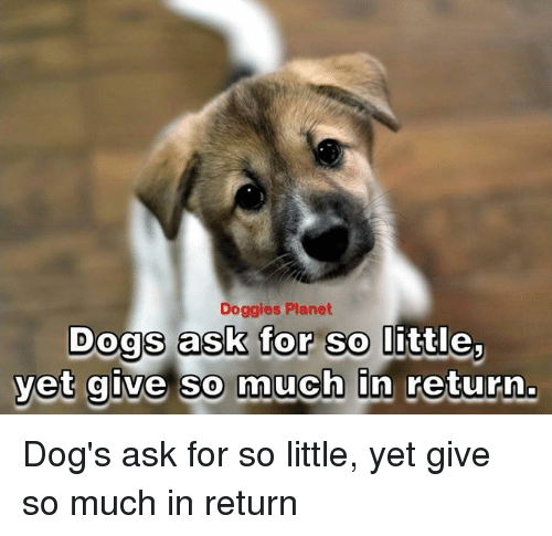 Memes, Planets, and Asking: Doggies Planet  Dogs ask for so return.  yet give so much  In Dog's ask for so little, yet give so much in return