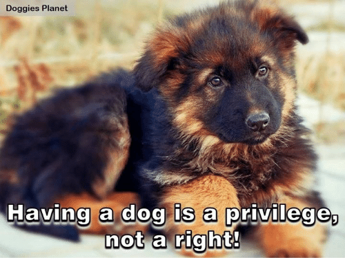 Memes, Planets, and 🤖: Doggies Planet  Having a dog is a privilege  not a right!