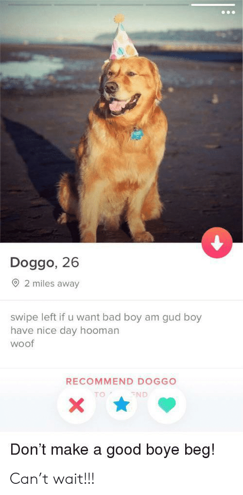 woof: Doggo, 26  2 miles away  swipe left if u want bad boy am gud boy  have nice day hooman  woof  RECOMMEND DOGGO  TO  ND  Don't make a good boye beg! Can't wait!!!