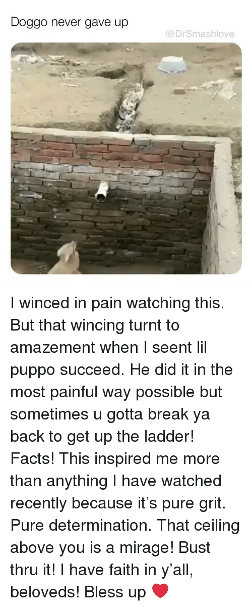 Amazement: Doggo never gave up  @DrSmashlove I winced in pain watching this. But that wincing turnt to amazement when I seent lil puppo succeed. He did it in the most painful way possible but sometimes u gotta break ya back to get up the ladder! Facts! This inspired me more than anything I have watched recently because it's pure grit. Pure determination. That ceiling above you is a mirage! Bust thru it! I have faith in y'all, beloveds! Bless up ❤️