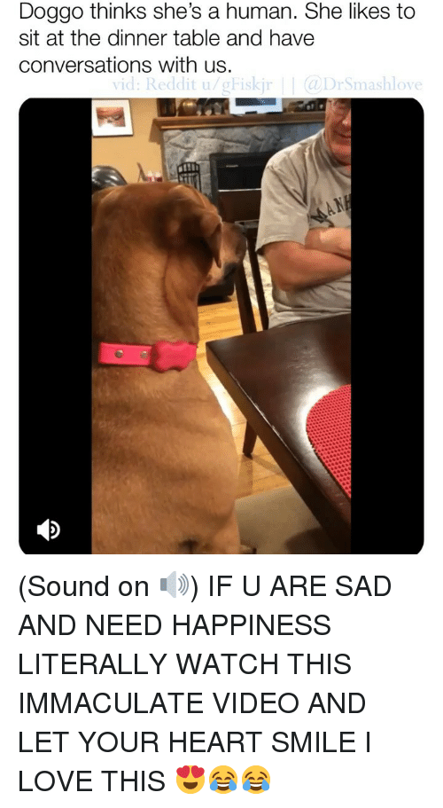 Love, Memes, and Reddit: Doggo thinks she's a human. She likes to  sit at the dinner table and have  conversations with us.  vid: Reddit u/gFiskj  DrSmashlove  VIC (Sound on 🔊) IF U ARE SAD AND NEED HAPPINESS LITERALLY WATCH THIS IMMACULATE VIDEO AND LET YOUR HEART SMILE I LOVE THIS 😍😂😂