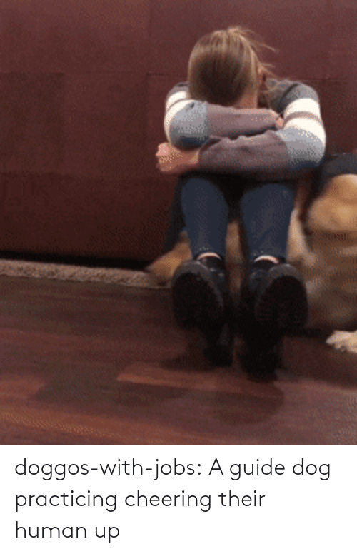 Jobs: doggos-with-jobs: A guide dog practicing cheering their human up