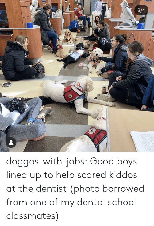scared: doggos-with-jobs:  Good boys lined up to help scared kiddos at the dentist (photo borrowed from one of my dental school classmates)