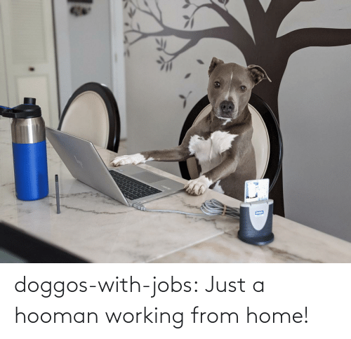 Hooman: doggos-with-jobs:  Just a hooman working from home!