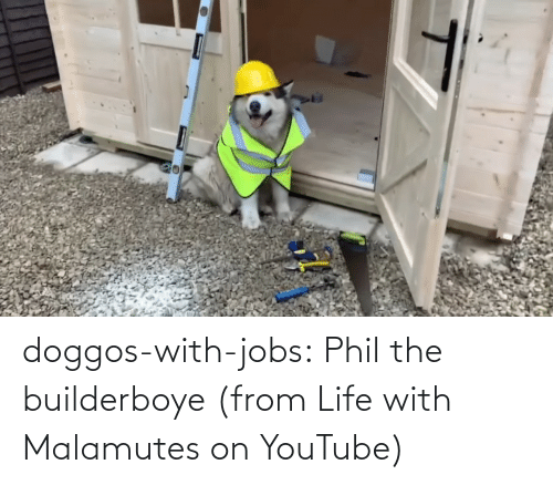 Phil: doggos-with-jobs:  Phil the builderboye (from Life with Malamutes on YouTube)
