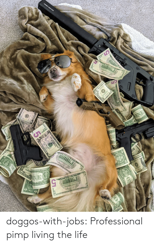 Life, Tumblr, and Blog: doggos-with-jobs:  Professional pimp living the life