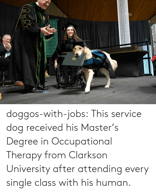 service: doggos-with-jobs:  This service dog received his Master's Degree in Occupational Therapy from Clarkson University after attending every single class with his human.