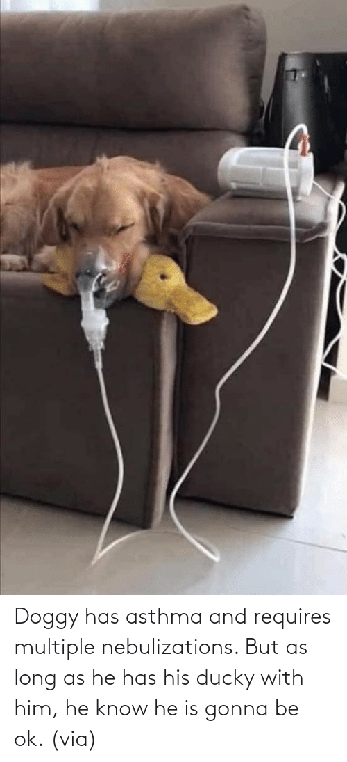 With: Doggy has asthma and requires multiple nebulizations. But as long as he has his ducky with him, he know he is gonna be ok. (via)