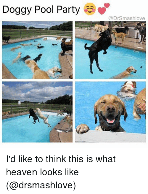 Funny, Heaven, and Party: Doggy Pool Party  Drsmashlove I'd like to think this is what heaven looks like (@drsmashlove)