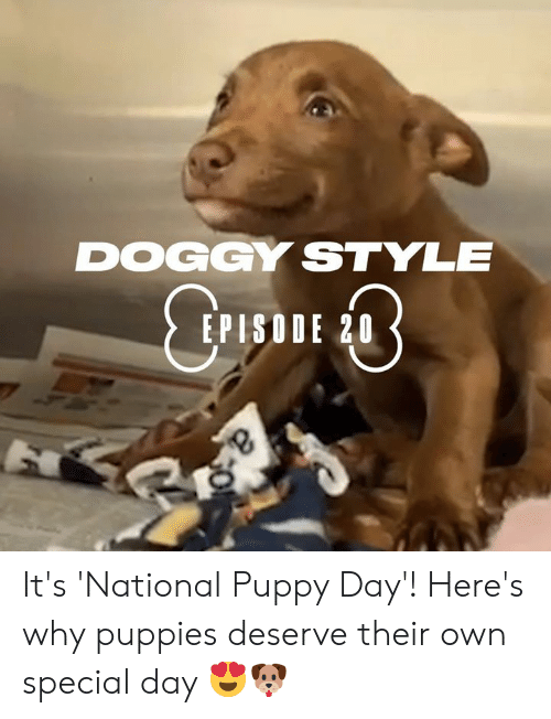 doggy style: DOGGY STYLE  EPISODE 20 It's 'National Puppy Day'! Here's why puppies deserve their own special day 😍🐶