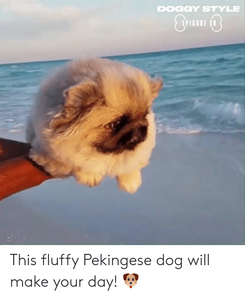 doggy style: DOGGY STYLE  EPISODE 28 This fluffy Pekingese dog will make your day! 🐶