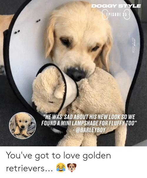 "doggy style: DOGGY STYLE  EPISODE 35  ""HE WAS SAD ABOUT HIS NEW LOOK SO WE  FOUND A MINI LAMPSHADE FOR FLUFFY TOO""  @BARLEYBOY You've got to love golden retrievers... 😂🐶"