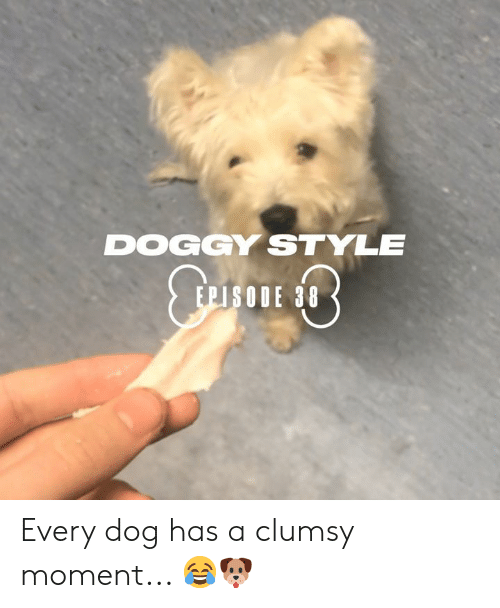 doggy style: DOGGY STYLE  EPISODE 38 Every dog has a clumsy moment... 😂🐶