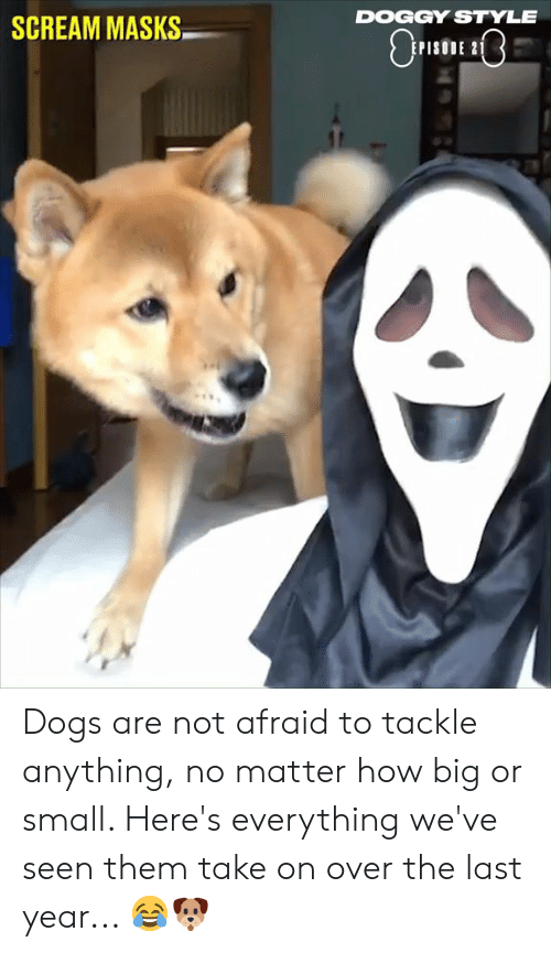 doggy style: DOGGY STYLE  SCREAM MASKS  PISODE 2 Dogs are not afraid to tackle anything, no matter how big or small. Here's everything we've seen them take on over the last year... 😂🐶