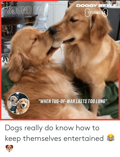 "doggy style: DOGGY STYLE  SOUND ON  E 32  P  ""WHEN TUG-OF-WAR LASTS TOO LONG"" Dogs really do know how to keep themselves entertained 😂🐶"