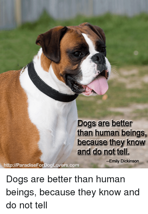 Memes, Emily Dickinson, and 🤖: Dogs are better  than human beings,  because they know  and do not tell.  Emily Dickinson  http://ParadiseForDogLovers.com Dogs are better than human beings, because they know and do not tell