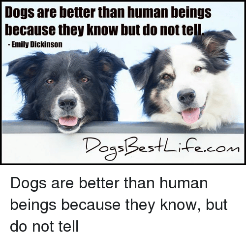 Dogs, Memes, and Emily Dickinson: Dogs are better than human beingS  because they know but do not tell  Emily Dickinson  DossBestifecom  ie.COn1 Dogs are better than human beings because they know, but do not tell