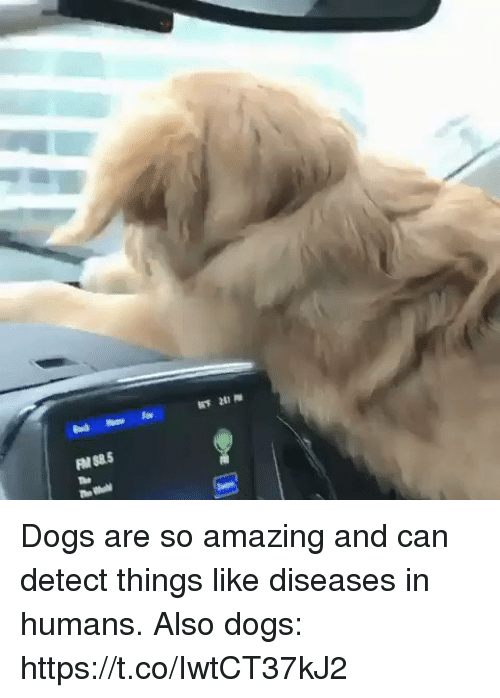 so amazing: Dogs are so amazing and can detect things like diseases in humans.  Also dogs: https://t.co/IwtCT37kJ2