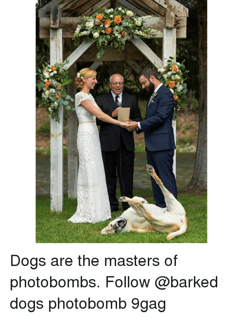 the masters: Dogs are the masters of photobombs. Follow @barked dogs photobomb 9gag