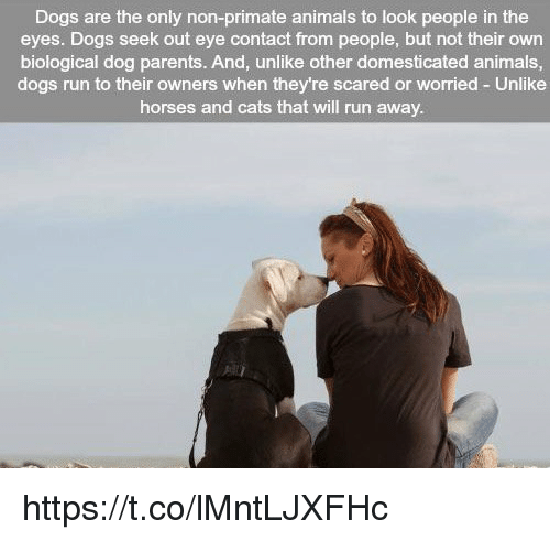 Memes, Biology, and 🤖: Dogs are the only non-primate animals to look people in the  eyes. Dogs seek out eye contact from people, but not their own  biological dog parents. And, unlike other domesticated animals,  dogs run to their owners when they're scared or worried Unlike  horses and cats that will run away. https://t.co/lMntLJXFHc