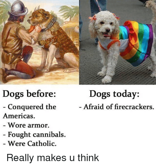 firecrackers: Dogs before:  Conquered the  Americas.  Wore armor.  Fought cannibals.  Were Catholic.  Dogs today:  Afraid of firecrackers. Really makes u think