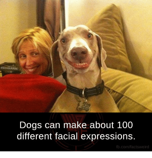 Dogs, Facts, and Memes: Dogs can make about 100  different facial expressions.  fb.com/facts Weird