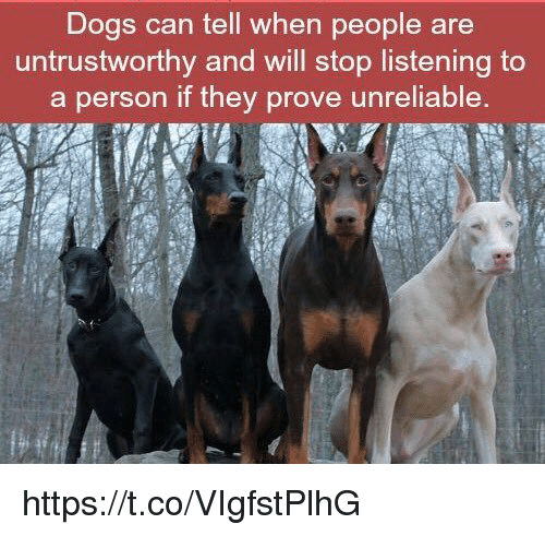 Dogs: Dogs can tell when people are  untrustworthy and will stop listening to  a person if they prove unreliable. https://t.co/VIgfstPlhG
