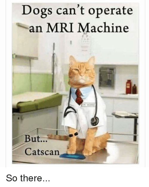 dogs cant operate an mri machine but cats can so 13545149 dogs can't operate an mri machine but cats can so there meme on