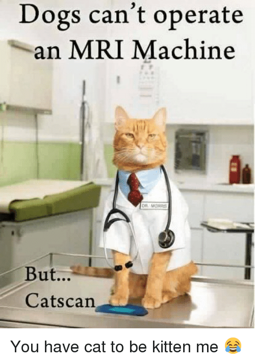 You Have Cat To Be Kitten Me: Dogs can't operate  an MRI Machine  But...  Cats can You have cat to be kitten me 😂