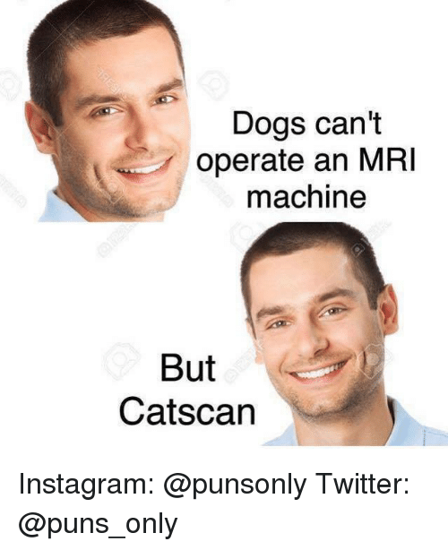 mri: Dogs can't  operate an MRI  machine  But  Catscan Instagram: @punsonly Twitter: @puns_only