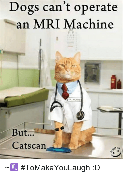 mri machine: Dogs can't operate  an MRI Machine  DR MORRIS  But...  Cats can ~♏ #ToMakeYouLaugh :D
