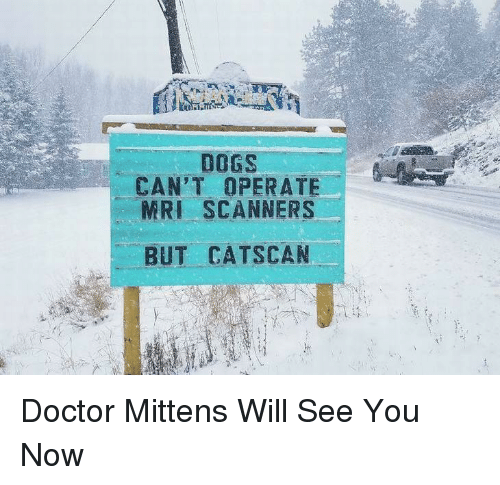 mri: DOGS  CAN'T OPERATE  MRI SCANNERS  BUT CATSCAN Doctor Mittens Will See You Now