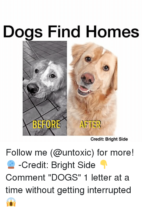 "Memes, 🤖, and Interrupt: Dogs Find Homes  BEFORE AFTER  Credit: Bright Side Follow me (@untoxic) for more! 🔮 -Credit: Bright Side 👇Comment ""DOGS"" 1 letter at a time without getting interrupted 😱"