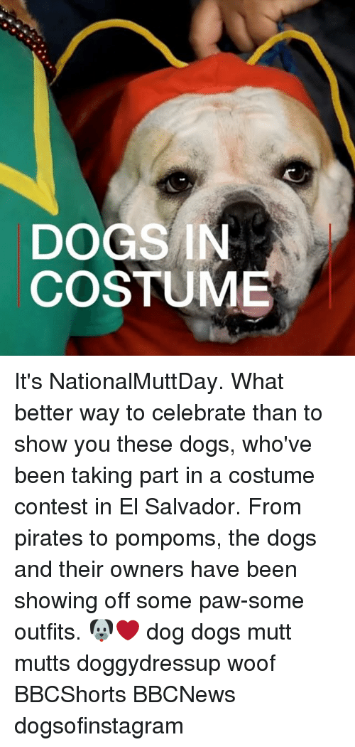 Pawing: DOGS IN  COSTUME It's NationalMuttDay. What better way to celebrate than to show you these dogs, who've been taking part in a costume contest in El Salvador. From pirates to pompoms, the dogs and their owners have been showing off some paw-some outfits. 🐶❤️ dog dogs mutt mutts doggydressup woof BBCShorts BBCNews dogsofinstagram