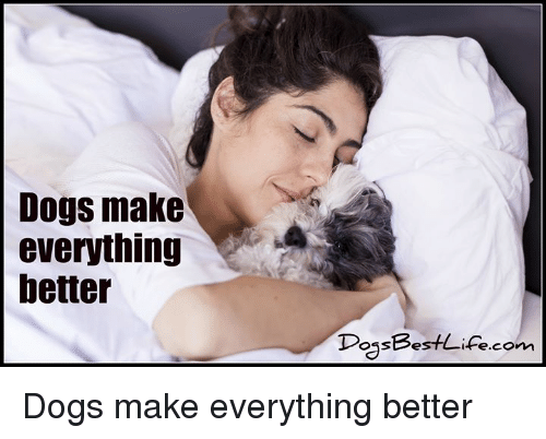Dogs, Memes, and 🤖: Dogs make  everything  better  DossBest Ae.com Dogs make everything better