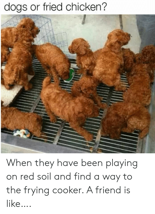 Fried: dogs or fried chicken? When they have been playing on red soil and find a way to the frying cooker.  A friend is like….