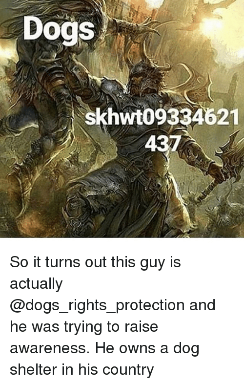 Dogs, Memes, and 🤖: Dogs  skhwt09334621  43 So it turns out this guy is actually @dogs_rights_protection and he was trying to raise awareness. He owns a dog shelter in his country