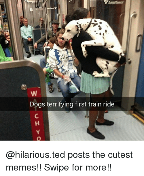 train ride: Dogs terrifying first train ride @hilarious.ted posts the cutest memes!! Swipe for more!!