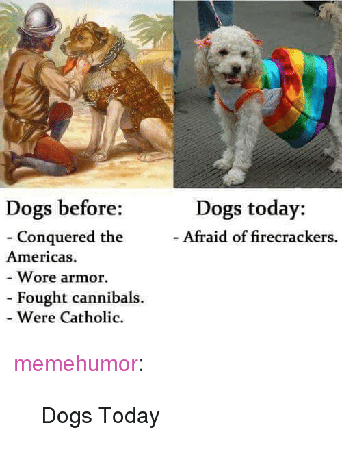 """firecrackers: Dogs today:  - Afraid of firecrackers.  Dogs before:  - Conquered the  Wore armor.  Were Catholic  Americas  Fought cannibals. <p><a href=""""http://memehumor.net/post/165699014067/dogs-today"""" class=""""tumblr_blog"""">memehumor</a>:</p>  <blockquote><p>Dogs Today</p></blockquote>"""