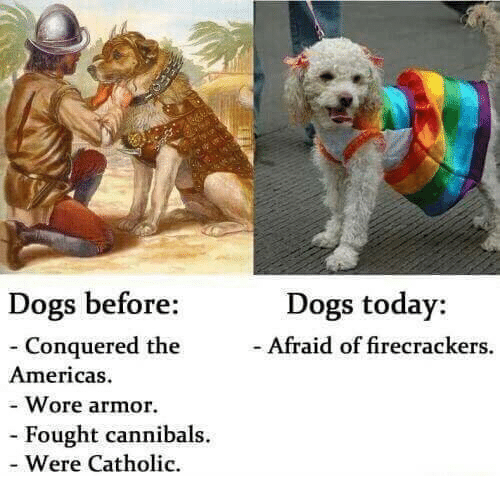 firecrackers: Dogs today:  Afraid of firecrackers.  Dogs before:  - Conquered the  Americas  - Wore armor  - Fought cannibals.  Were Catholic.