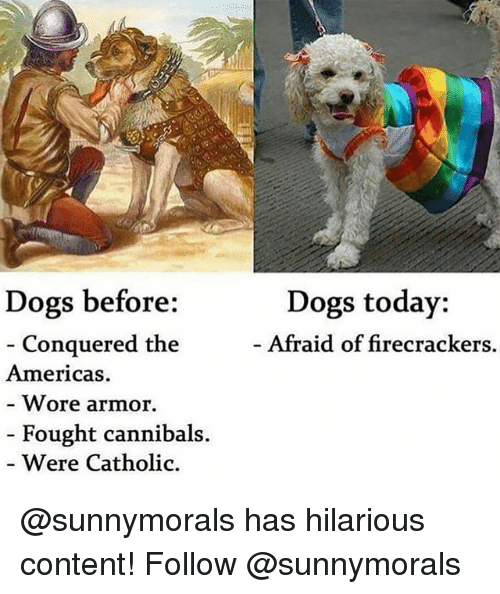 firecrackers: Dogs today:  Afraid of firecrackers.  Dogs before:  Conquered the  Americas  Wore armor.  Fought cannibals.  Were Catholic. @sunnymorals has hilarious content! Follow @sunnymorals