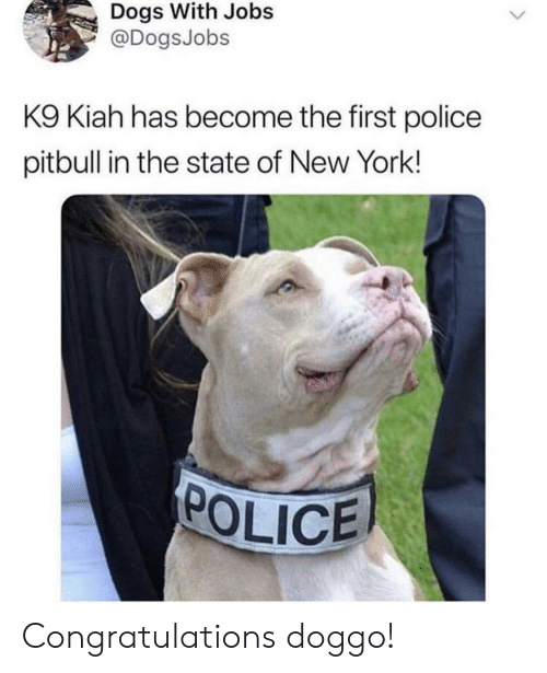 Pitbull: Dogs With Jobs  @DogsJobs  K9 Kiah has become the first police  pitbull in the state of New York!  POLICE Congratulations doggo!