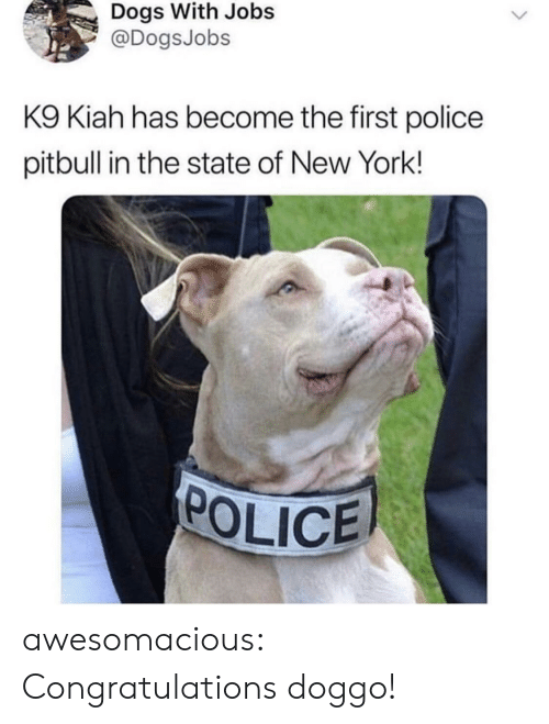 Pitbull: Dogs With Jobs  @DogsJobs  K9 Kiah has become the first police  pitbull in the state of New York!  POLICE awesomacious:  Congratulations doggo!