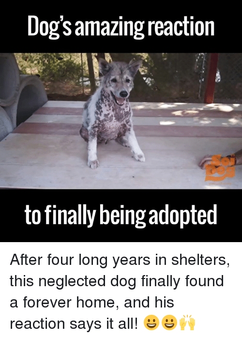 dank: Dogsamazing reaction  to finally being adopted After four long years in shelters, this neglected dog finally found a forever home, and his reaction says it all! 😀😀🙌