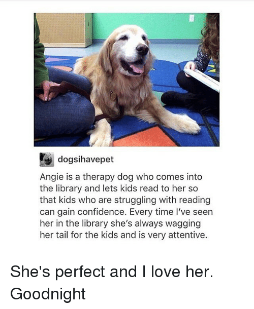 Confidence, Love, and Memes: dogsihavepet  Angie is a therapy dog who comes into  the library and lets kids read to her so  that kids who are struggling with reading  can gain confidence. Every time I've seen  her in the library she's always wagging  her tail for the kids and is very attentive. She's perfect and I love her. Goodnight